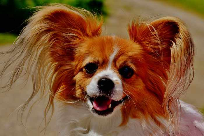 pets grooming services and ideas