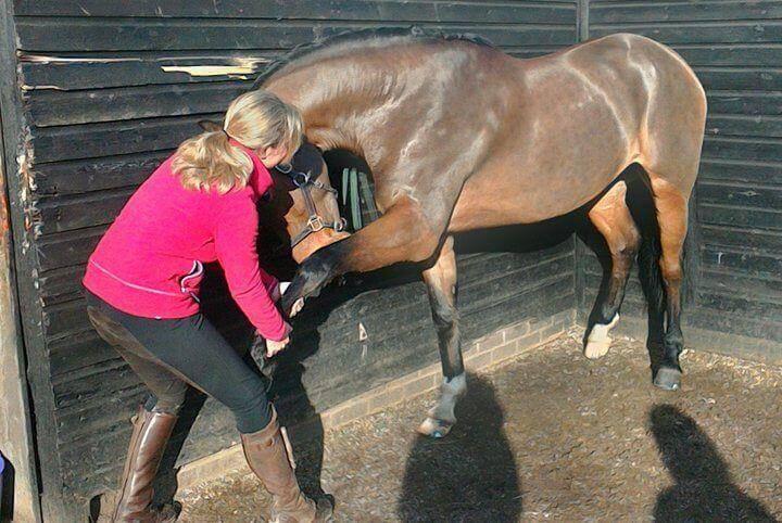 equine massage ideas