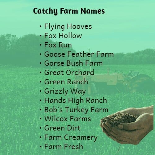 Catchy Farm Names